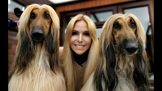 THE AFGHAN HOUND - The Worlds Most Glamorous Dog