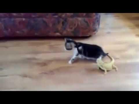 Mèo con bị hù giật nảy mình