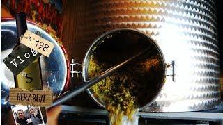 Pressen, filtrieren   So wird Weisswein gemacht #2   Weinvlog #198