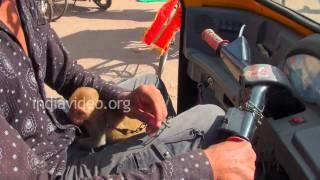 A Monkey in Auto Rickshaw, Puri