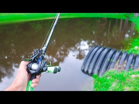 Catching GIANT Bass on BIG WORMS (Bank Fishing)