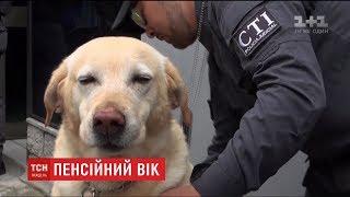 У Колумбії службових собак із почестями відправляють на пенсію