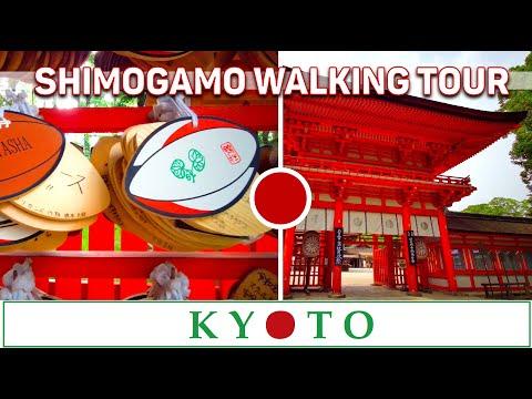 KYOTO, Shimogamo Shrine Walking Tour ⛩ + Kamo River and KAWAI Shrine ⛩♥⛩