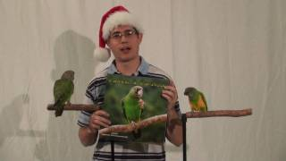 Parrot Training Perches Holiday Special