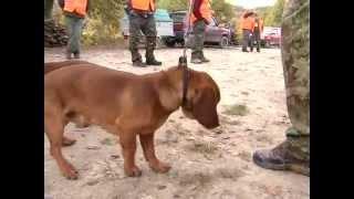 preview picture of video '2009-2010 Puntata #03 - Petriano - Caccia al Cinghiale - 1° Parte'