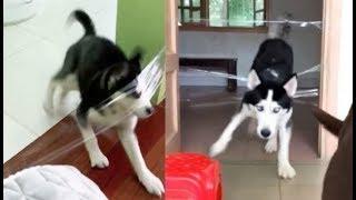 Кошки, Собаки и Прозрачная лента 😹🐶   Тест на Сообразительность Кошек и Собак