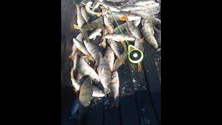 Рыбалка омская область отчеты о