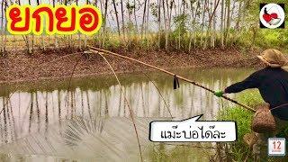 ยกยอ ตกปลา ใส่แน่ง ทอดแห ►Fishing lifestyle Ep.207