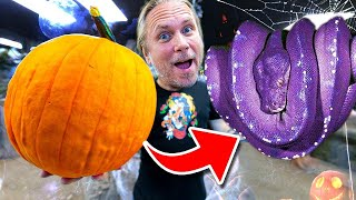 FED ALL MY ANIMALS PUMPKINS FOR HALLOWEEN!! | BRIAN BARCZYK