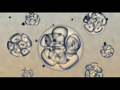 Причины неудачного ЭКО. Подготовка эндометрия к переносу эмбрионов