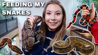 Progress In My Pet Room + Feeding My Snakes!