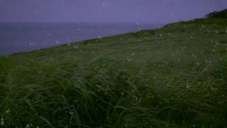 Rain & Wind Sounds for Sleep & Relaxation w/ Distant Thunder & Ocean Waves | Relaxing White Noise