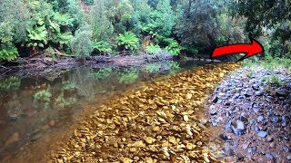 How much gold can be found prospecting downstream??