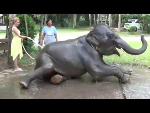 Настя поливает слона на острове Ко Чанг (Таиланд)
