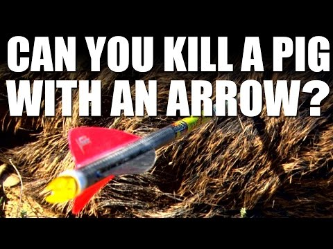 Can you kill a pig with an arrow?