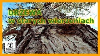 Drzewa w starych wierzeniach