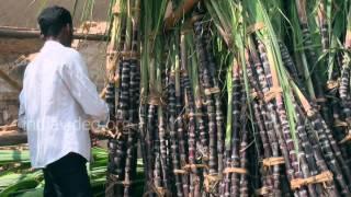 Sugar Cane Selling in Thanjavur