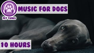 Relax My Dog in my House - Music For Dogs, Puppy Sleeping Lullabies  - Helped 2 million dogs already