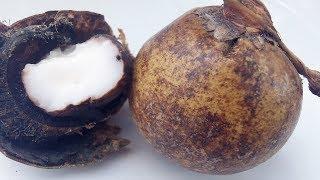 Coyul, Cocoyul, Cocoyol, bastones de Tabago, Acrocomia mexicana