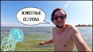 Жизнь На Острове ДЖАРЫЛГАЧ 🐬 Море, Дельфины, Богомол И Кабаны 🐗 #2