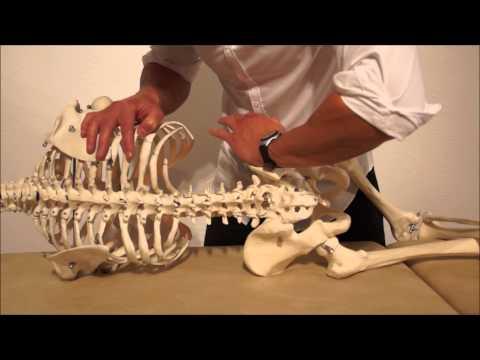 Osteochondrose in Rostov