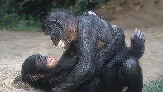 САМЫЕ РОМАНТИЧНЫЕ ЖИВОТНЫЕ. Про животных