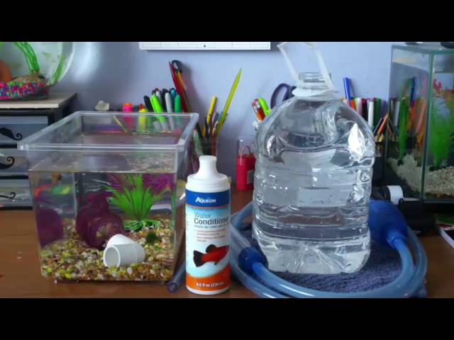 How To Do A Water-Change On A Small Betta Tank