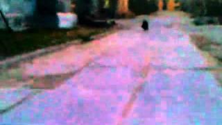 Медведь в городе Ноябрьске/Bear in the Russian town of Noyabrsk (Siberia)