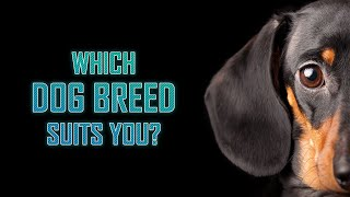 Which Dog Breed Suits You?