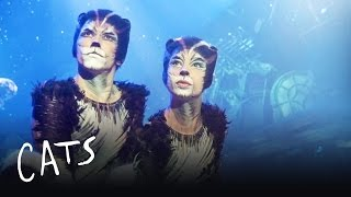The invitation to the jellicle ball cats the musical most the cats at the jellicle ball cats the musical stopboris Choice Image