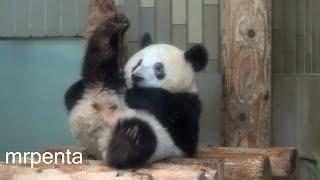 今日のシャンシャン9月5日上野動物園香香パンダ