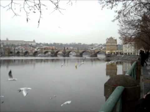 Seagulls in Praha