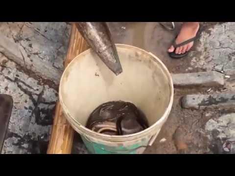Оригинальный способ ловли угря