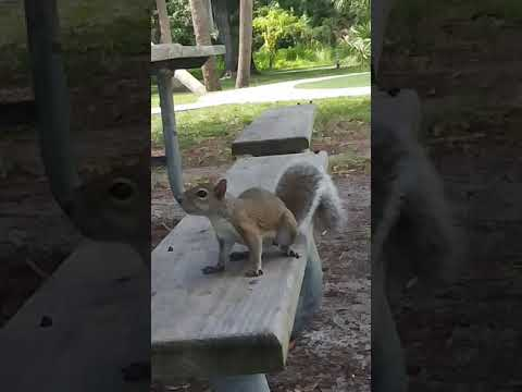 don't feed the animals people. this guy didn't even want acorns, only human food.