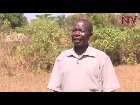 NTV GREEN: Farmers fight food insecurity with climate smart agriculture