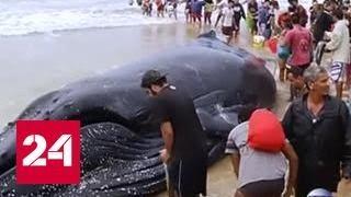 В Бразилии триста волонтеров спасли детеныша кита