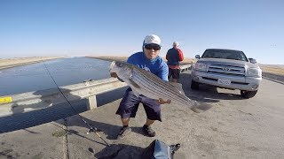 Giant California Aqueduct Striper (My Personal Best)