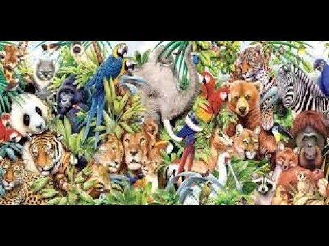 Animal kingdom 5.. Hayvanlar Alemi