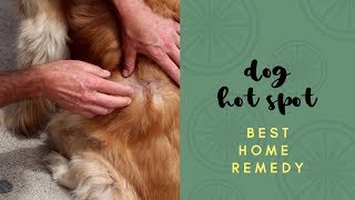 Best Dog Hot Spot Home Remedy