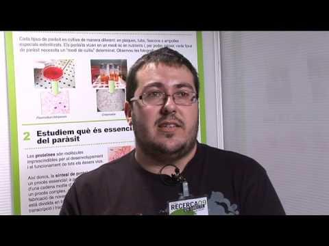 El parasitismo como el fenómeno biológico de la clasificación de los parásitos