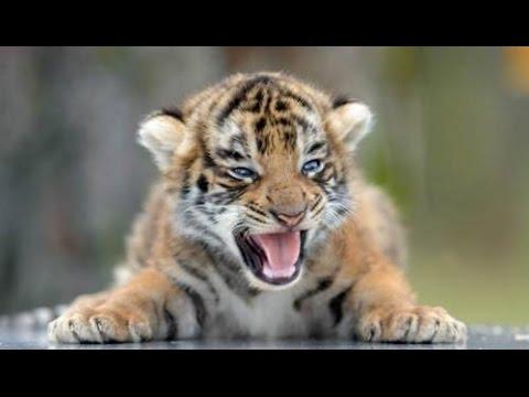 Cute and Funny Big Cat Babies