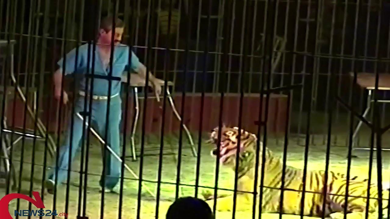 Circo Orfei, domatore sbranato dalle tigri che stava addestrando