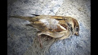 "Breaking: ""Dozens Birds Fall From Sky In Arizona"" Hosea Prophecy"