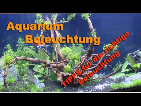 Aquarium Beleuchtung Tipps für die richtige Beleuchtung