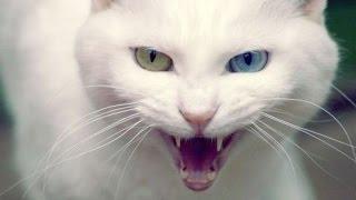 Приколы с животными. Упрямый. боевой кот Том против собаки Мери.