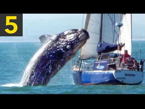 Top 5 Whale VS Boat Videos