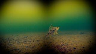 Зимняя рыбалка. Ерш и окунь на мормышку. Подводная камера