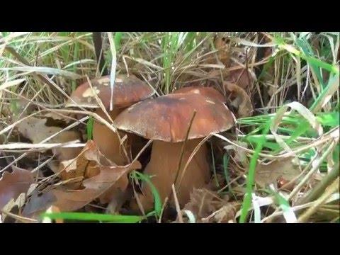 Siccome è rapidamente possibile guarire una posizione di fungo