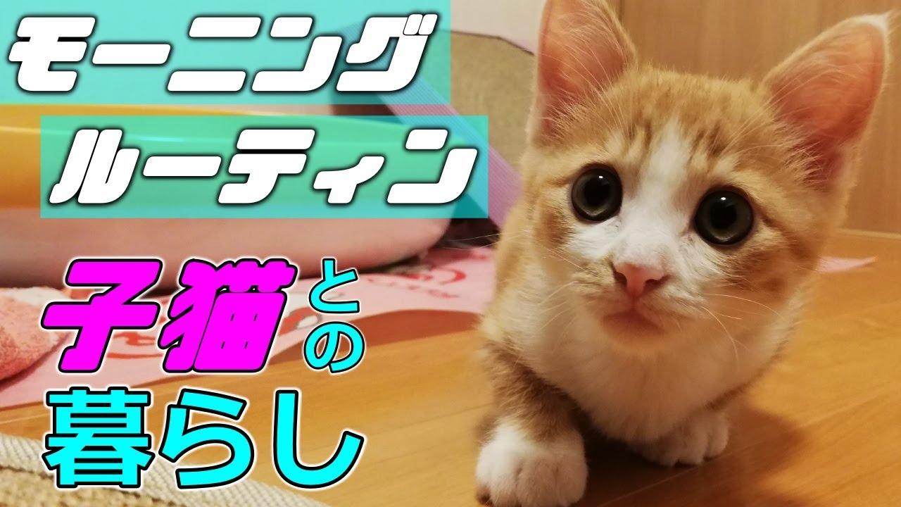 [茶トラ]子猫のモーニングルーティン!家族と子猫の朝(保護猫)