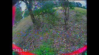 Tree Track V3 drone racing